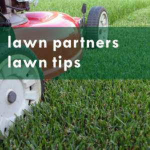 lawn partners top tips
